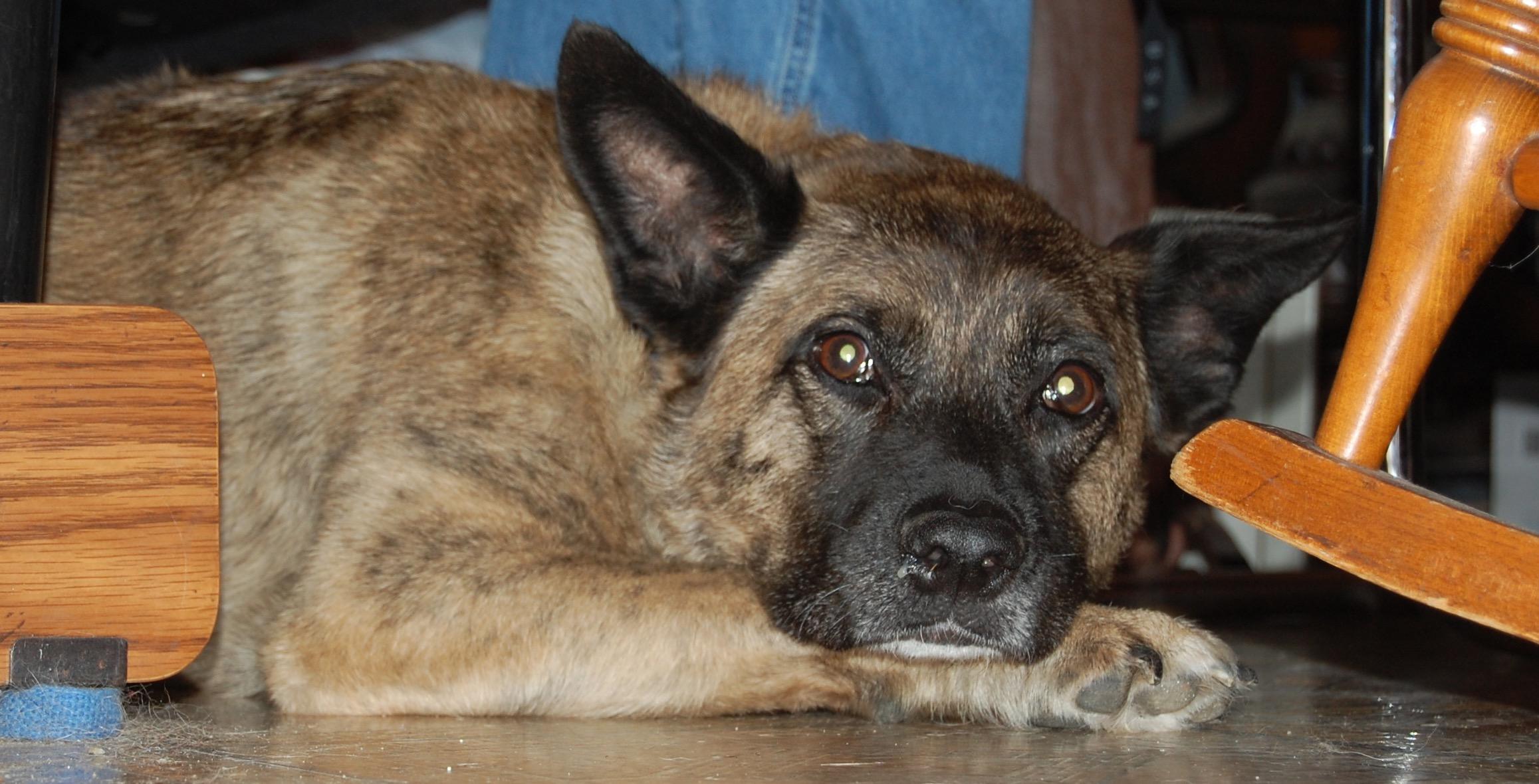 Sunshine the family dog, Aug. 9, 2009.